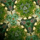Kaleidoscope by Joy Fitzhorn