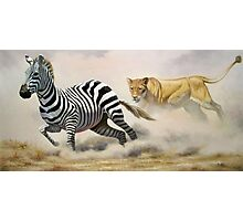 Lioness Chasing a Zebra Painting  Photographic Print