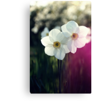 In the meadow... Canvas Print