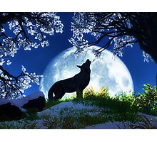 Howl at the Moon Photographic Print