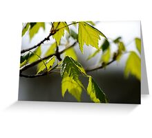 Springtime Leaves II Greeting Card