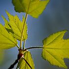Springtime Leaves III by karineverhart