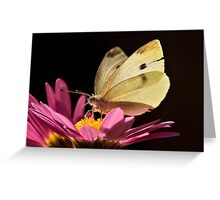 Cabbage Moth (Pieris rapae) Greeting Card