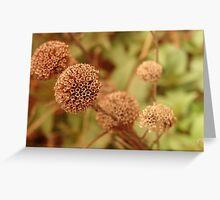Dried Flower Greeting Card