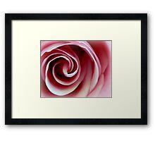 Swirl of Pink Rose Framed Print