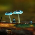 Fungi Family by Kylie Reid