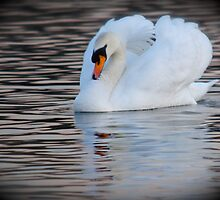 A Swan of Hyde Park by Kent Burton