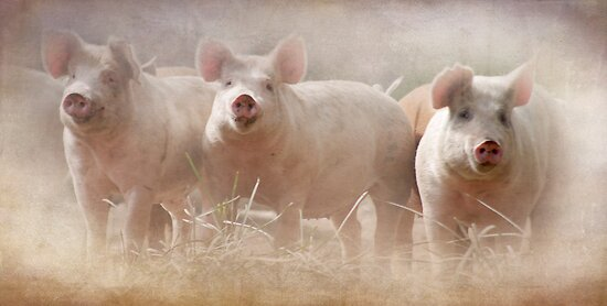 The Three Little Pigs by Clare Colins