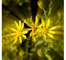 radiant yellow Photographic Print