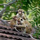 Monkeys' Business by Cole Stockman