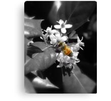 Honey Bee & Holly Canvas Print