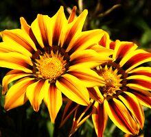 brilliance by flower by angeldragon069