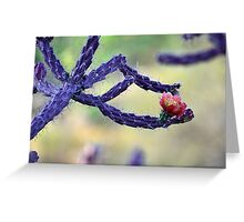 Purple cholla Greeting Card