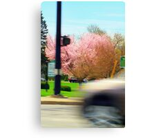 Early Blossoms Canvas Print