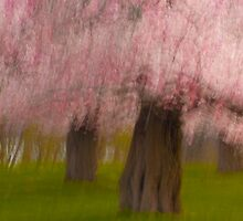 Blossom Bourree by sundawg7