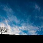 Serenity by redtree