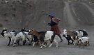 Shepherd Girl by docophoto