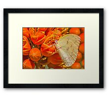 Yellow Migrant Framed Print