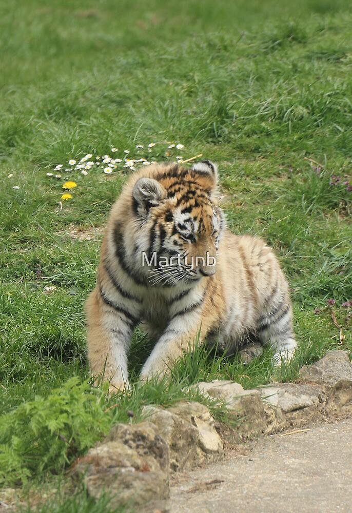 young tiger cub by Martynb