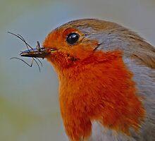 Robin III by wraysburyade