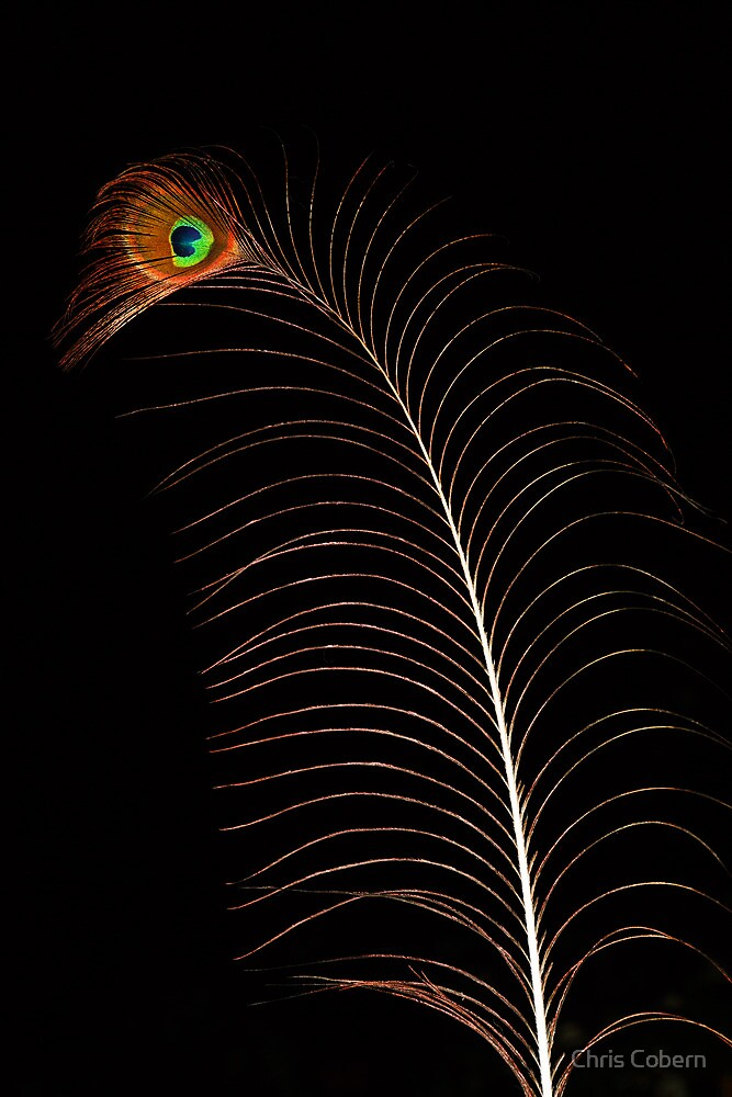 Peacock Feather by Chris Cobern