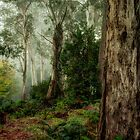 Guardians  - Mount Wilson - NSW  - The HDR Experience by Philip Johnson