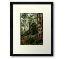 Guardians  - Mount Wilson - NSW  - The HDR Experience Framed Print