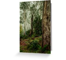 Guardians  - Mount Wilson - NSW  - The HDR Experience Greeting Card