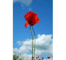 Poppy against blue sky Photographic Print