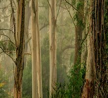 The Long Shot - Mount Wilson - NSW  - THE HDR Experience by Philip Johnson