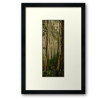 The Long Shot - Mount Wilson - NSW  - THE HDR Experience Framed Print