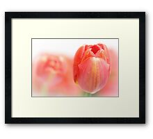 Sweet fresh Tulip... Framed Print