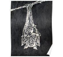 HANGING BAT - oil portrait Poster