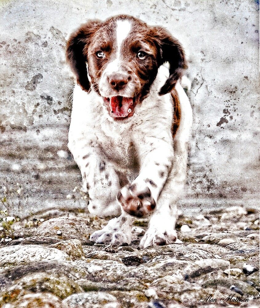 Springin' Springer by Alan Mattison