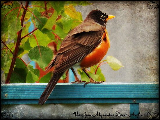 Spring Robin by Donna Anglin Husband