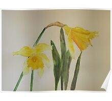 Yellow Daffodils Poster