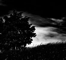 Silver Oak by Speculum Anima Photography