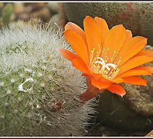""""""" After years of being Dormant, a flower appears"""" by Malcolm Chant"""