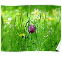 Springtime at Batemans Poster