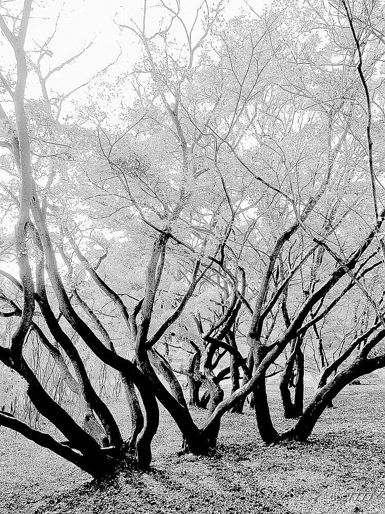 Ghost Branches by David Schroeder