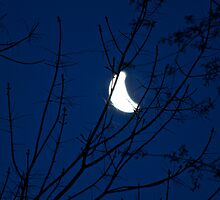 Dawn moon 1 by Carolyn Clark