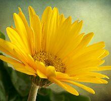 Gerbera Daisy .•*¨`*•✿ Yellow  by Penny Odom