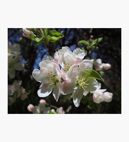 Blossoms! Photographic Print