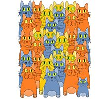 Thirty-One Kitty Cats Photographic Print