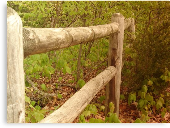 Fence in the Woods by PicsbyJody