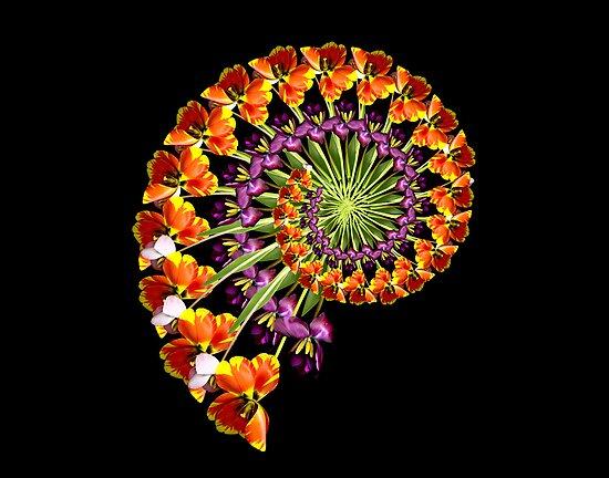 FLOWER SPIRAL by juliefallone