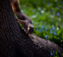 Spring Squirrel by Michael  Kemp