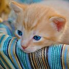 Blue Eyes by Bill Colman