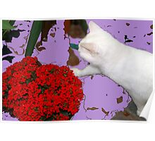 Playing with leaves and flowers Poster