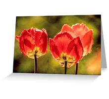 Glowing Red Tulips Greeting Card